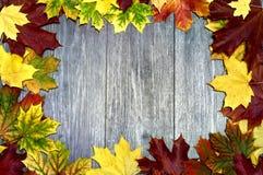 Πλαίσιο με τα ζωηρόχρωμα φύλλα Στοκ Εικόνες