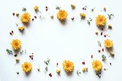 Πλαίσιο με τα κίτρινα λουλούδια στο άσπρο υπόβαθρο Στοκ Εικόνες