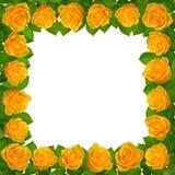 Πλαίσιο με τα κίτρινα τριαντάφυλλα η ανασκόπηση απομόνωσε το λευκό στοκ εικόνες με δικαίωμα ελεύθερης χρήσης