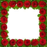 Πλαίσιο με τα κόκκινα τριαντάφυλλα η ανασκόπηση απομόνωσε το λευκό στοκ εικόνες