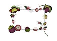 Πλαίσιο με τα πορφυρά mangosteen φρούτα και τα λουλούδια, χέρι που σύρεται και που χρωματίζεται απεικόνιση αποθεμάτων