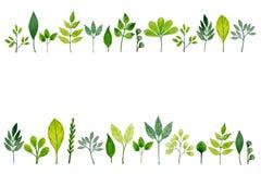 Πλαίσιο με τα πράσινα φύλλα Watercolor Στοκ Φωτογραφίες