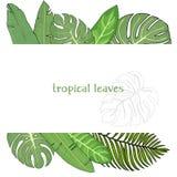 Πλαίσιο με τα φύλλα των τροπικών φυτών Ζωηρόχρωμη διανυσματική απεικόνιση στο ύφος σκίτσων Χλεύη επάνω Στοκ Φωτογραφίες