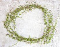 Πλαίσιο με τους πράσινους κλάδους δέντρων στο άσπρο υπόβαθρο πετρών Στοκ Φωτογραφίες