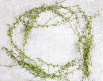 Πλαίσιο με τους πράσινους κλάδους δέντρων στο άσπρο υπόβαθρο πετρών Στοκ φωτογραφίες με δικαίωμα ελεύθερης χρήσης