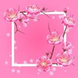 Πλαίσιο με το άνθος sakura ή κερασιών Floral ιαπωνική διακόσμηση των ανθίζοντας λουλουδιών διανυσματική απεικόνιση