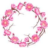 Πλαίσιο με το άνθος sakura ή κερασιών Floral ιαπωνική διακόσμηση των ανθίζοντας λουλουδιών απεικόνιση αποθεμάτων