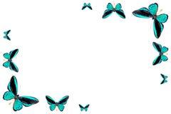 πλαίσιο πεταλούδων Στοκ εικόνες με δικαίωμα ελεύθερης χρήσης