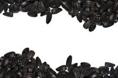 Πλαίσιο σωρών ηλίανθων σπόρων στο άσπρο υπόβαθρο Ελεύθερο κείμενο πρόσθιο το κείμενό σας Στοκ εικόνα με δικαίωμα ελεύθερης χρήσης