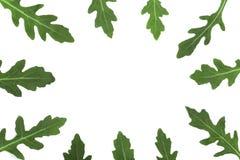 Πλαίσιο του πράσινου φρέσκου φύλλου rucola ή arugula που απομονώνεται στο άσπρο υπόβαθρο με το διάστημα αντιγράφων για το κείμενό Στοκ Εικόνα