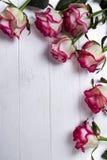 Πλαίσιο τριαντάφυλλων στο ξύλινο άσπρο υπόβαθρο Στοκ Εικόνες