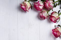 Πλαίσιο τριαντάφυλλων στο ξύλινο άσπρο υπόβαθρο Στοκ εικόνα με δικαίωμα ελεύθερης χρήσης