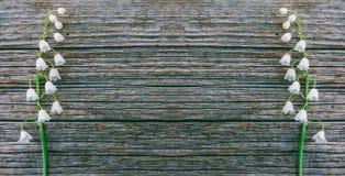 Πλαίσιο των ευωδών κρίνων λουλουδιών της κοιλάδας στο γκρίζο ξύλινο αναδρομικό υπόβαθρο στις ρωγμές Στοκ φωτογραφία με δικαίωμα ελεύθερης χρήσης