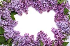 Πλαίσιο των ιωδών λουλουδιών Μια ανθοδέσμη των πορφυρών λουλουδιών σε ένα άσπρο υπόβαθρο Στοκ Φωτογραφία