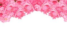 Πλαίσιο των καλών ρόδινων τριαντάφυλλων στο άσπρο υπόβαθρο Πίνακας λουλουδιών για την αγάπη, βαλεντίνος, μητέρα, γυναίκες Θέμα χα Στοκ Εικόνα