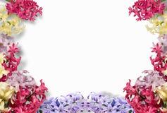 Πλαίσιο των πολύχρωμων υάκινθων στο άσπρο υπόβαθρο Επίπεδος βάλτε, τοπ άποψη floral πρότυπο καρδιών λουλουδιών απελευθέρωσης πετα στοκ εικόνες