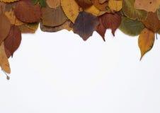 πλαίσιο φθινοπώρου Στοκ Φωτογραφίες