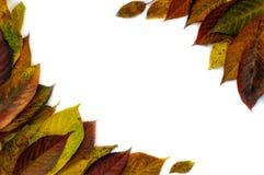 Πλαίσιο φιαγμένο από κιτρινοπράσινα φύλλα, κλάδοι στο άσπρο υπόβαθρο Επίπεδος βάλτε, τοπ άποψη ζωή φθινοπώρου ακόμα στοκ εικόνες με δικαίωμα ελεύθερης χρήσης