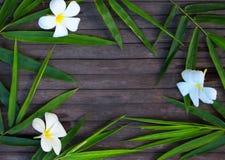 Πλαίσιο φύλλων μπαμπού στο αγροτικό ξύλινο υπόβαθρο Φύλλο μπαμπού και λουλούδι frangipani στην ξυλεία Στοκ Εικόνες