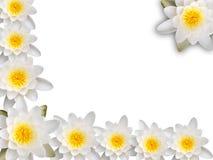 πλαίσιο waterlily Στοκ Εικόνα