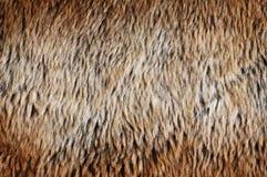 πλαστή γούνα Στοκ Φωτογραφίες