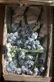 Πλαστικά πλαστά ζωηρόχρωμα λουλούδια λουλουδιών Στοκ Εικόνες