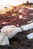Πλαστικά ρύπανση και φύκια μπουκαλιών στην αμμώδη καραϊβική παραλία στοκ εικόνα με δικαίωμα ελεύθερης χρήσης