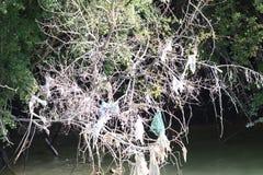 Πλαστικές τσάντες και ένωση απορριμμάτων στα δέντρα από την κοίτη του ποταμού στοκ εικόνα