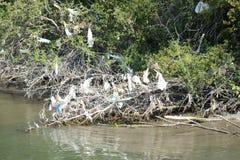 Πλαστικές τσάντες και ένωση απορριμμάτων στα δέντρα από την κοίτη του ποταμού στοκ φωτογραφία με δικαίωμα ελεύθερης χρήσης
