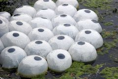 πλαστικοί λοβοί φυτών ζωή&s Στοκ Εικόνα