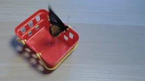 Πλαστικός ξύλινος πίνακας πεταλούδων καλαθιών φιλμ μικρού μήκους