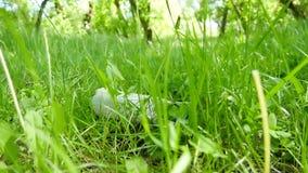 Πλαστικό μπουκάλι που βρίσκεται στην πράσινη χλόη στο πάρκο Απορρίματα, ζημία στο περιβάλλον φιλμ μικρού μήκους