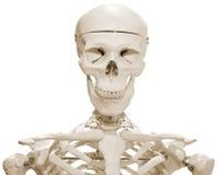 πλαστός σκελετός στοκ εικόνα