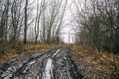 Πλαϊνή διαδρομή στο δάσος φθινοπώρου Στοκ εικόνες με δικαίωμα ελεύθερης χρήσης