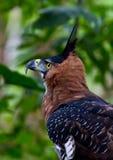 πλευρά θηραμάτων πουλιών στοκ φωτογραφία με δικαίωμα ελεύθερης χρήσης