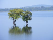 πλευρά λιμνών στοκ φωτογραφία με δικαίωμα ελεύθερης χρήσης