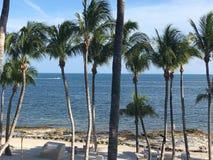 Πλευρά του Ατλαντικού Ωκεανού της παραλίας της Key West Φλώριδα που ευθυγραμμίζεται με τους φοίνικες στοκ εικόνα