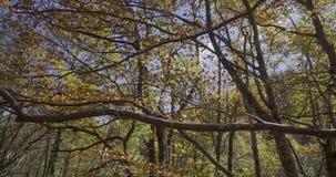 Πλευρική μετακίνηση με τους κλάδους των δέντρων κοντά σε μας απόθεμα βίντεο
