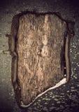 πληγωμένος δέντρων Στοκ φωτογραφία με δικαίωμα ελεύθερης χρήσης