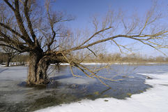 πλημμυρίζοντας χειμώνας στοκ φωτογραφία με δικαίωμα ελεύθερης χρήσης
