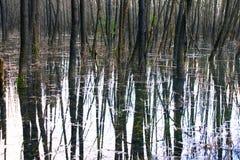 πλημμυρισμένο δάσος Στοκ φωτογραφίες με δικαίωμα ελεύθερης χρήσης