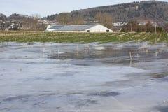 Πλημμυρισμένο χειμώνας αγροτικό έδαφος Στοκ φωτογραφία με δικαίωμα ελεύθερης χρήσης