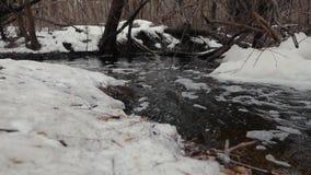 Πλημμύρα άνοιξη σε ένα χιονώδες δασικό Κίνημα του νερού μέσω του δάσους απόθεμα βίντεο