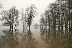 Πλημμύρα στο πάρκο φύσης Lonjsko polje, Κροατία στοκ εικόνα