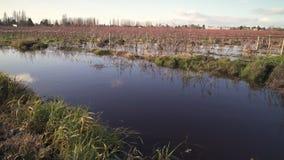 Πλημμύρα τομέων βακκινίων, γεωργία, 4K UHD φιλμ μικρού μήκους