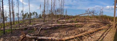 Πλοκή που καθαρίζεται δασική από τα δέντρα στοκ φωτογραφία