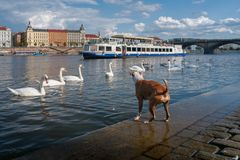 Πλοκή πόλεων Πράγα στοκ φωτογραφία