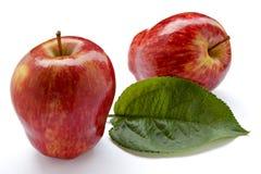 πλούσιοι συγκομιδών μήλων Στοκ εικόνα με δικαίωμα ελεύθερης χρήσης