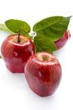 πλούσιοι συγκομιδών μήλων Στοκ Φωτογραφία