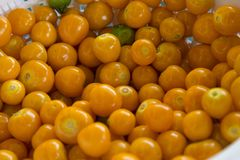 Πλούσιοι Physalis peruviana- στις βιταμίνες α, β, και γ Uchuvas που αυξάνεται σε ανατολικό Antioquia Στοκ Φωτογραφίες